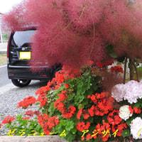 広島:花鳥風月~十五夜お月様と梅雨時期の花壇の花!