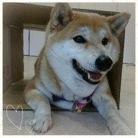 3月30日(木)…犬との暮らし方教室&パソコン教室