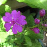 春の可愛い花が咲く