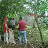 コスタリカ再訪(192)庭のグレープフルーツを売る