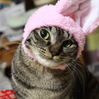 猫バカ?!