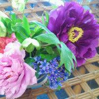 綺麗な花が咲きました♪