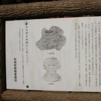 茨城県利根町、門の宮の大銀杏です!!