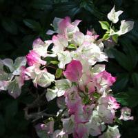 咲くやこの花館シリーズ (6月14日版)