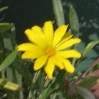 テラスの花  24
