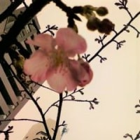 青い花々・・・桃色の花は桜なの?