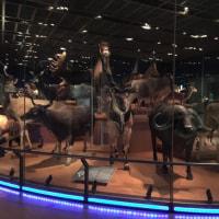 チャランポグッズと国立科学博物館