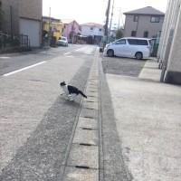 猫の日(=^x^=)