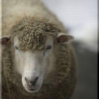 編み物談議に花が咲く…ってより、驚くこと言う~!!!(;゚Д゚)ひ、羊???