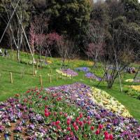 ・ 緑化よこはまフェア 里山ガーデン 初日見てきました 2017