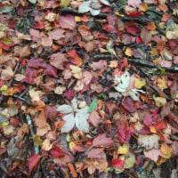 まだら模様の紅葉