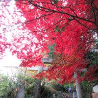 祝日の紅葉