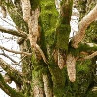 樹木が主役の写真ー19