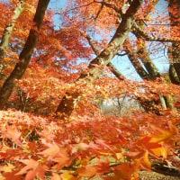京都府立植物園に、行ってみる。