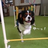 Dog.2.Be「愛犬しつけ教室」に行きました
