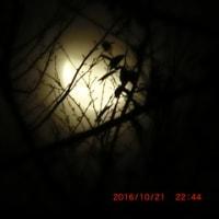 もう半月みたいな月が上ってきたっ!