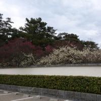梅と福寿草