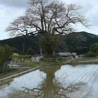 4/25 尾呂志の田んぼ