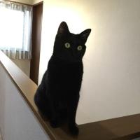 トノ階段でノビ〜♪
