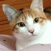ネコのすずさん&浴衣から作り直した作務衣