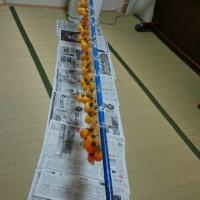 西条柿、干しました  (*^ー^)ノ♪