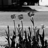 路傍に咲く花