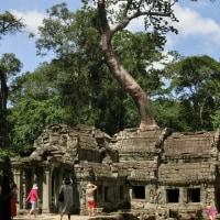 巨大なスポアン(榕樹)が寺院を支配する TA PROHM
