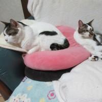 猫と、世界カメの日