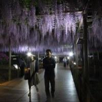 夜の曼陀羅寺