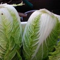 冬もの野菜