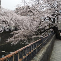 Cherry-blossom viewing part2