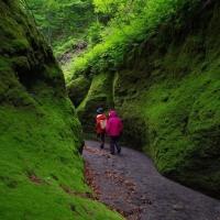 新緑の回廊 vol.3