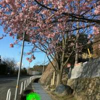 闘病日記3/27(月)・・・桜花