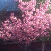 札幌の春はまだ遠いです(;・∀・)