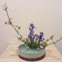 いけばな教室 4月 桜 盛花