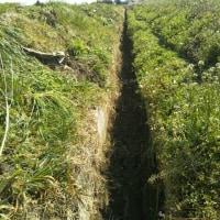 農業用水溝掃除@携帯