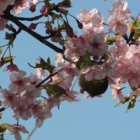 春はそこまで来ている・・・!?