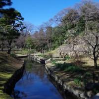 梅 小石川後楽園・・・湯島聖堂