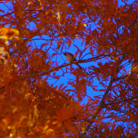 湖畔の鳥in大津市