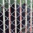 秘湯・宝川温泉の魅力③・・・ツキノワグマと一緒に入浴できる温泉!でブームに!所が名物は熊汁(~_~;)