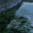 堺市 白鷺公園の蓮