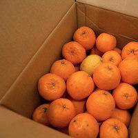 柑橘の季節