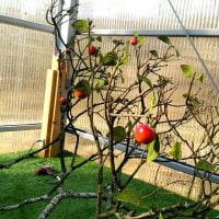 フェイク果樹と花壇ベースの作成