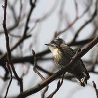 今日 出逢った鳥たち