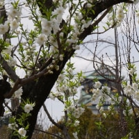 大阪城「桃園」を訪ねる!!