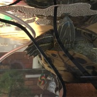 泡を食べる亀
