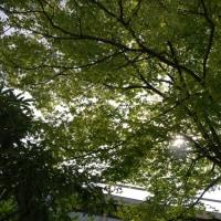 緑 濃く、広く