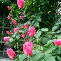 バラと天気管