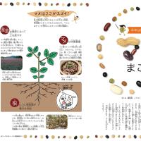 梅雨本番、これからが「豆蒔き」と「直まき」適時到来!『迷わず蒔けよ、蒔けば分かるさ!』