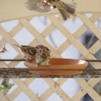可愛い鳥さんたち♡